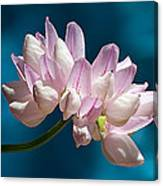 Fetch Flower Canvas Print
