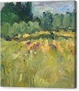 Field In Italy Canvas Print