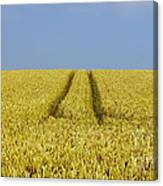 Field Of Corn Canvas Print