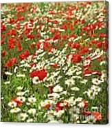 Field Of Daisies And Poppies. Canvas Print