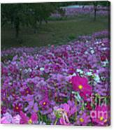 Field Of Flowers Along The Highway  Canvas Print