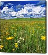 Field Of Flowers, Grasslands National Canvas Print