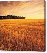 Field Of Grain Stubble Near St Canvas Print