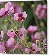 Field Of Japanese Anemones Canvas Print