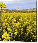 Field Of Mustard Flowers Canvas Print