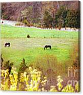 Field Of My Dreams Horses Canvas Print