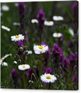 Field Of Spring Flowers Canvas Print