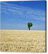 Field Of Wheat In Provence Canvas Print