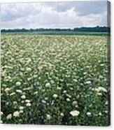 Field Of Wildflowers, Montezuma Canvas Print