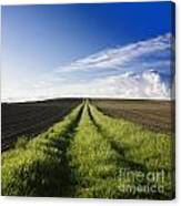 Field Path In Limagne. Auvergne. France. Europe Canvas Print