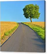 Field Path With Walnut Tree Canvas Print