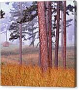 Field Pines And Fog In Shannon County Missouri Canvas Print