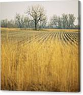 Fields At The Lillian Annette Rowe Bird Canvas Print