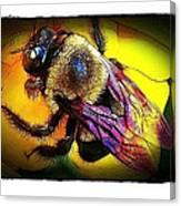 Fierce Bumblebee Canvas Print