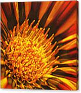 Fiery Passion Canvas Print