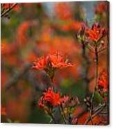 Fiery Spring Canvas Print