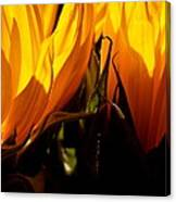 Fiery Sunflowers Canvas Print