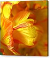 Fiery Tulip Canvas Print