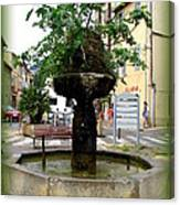 Fig Tree Fountain In Cassis Canvas Print