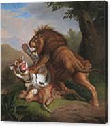 Fight Of A Lion With A Tige Canvas Print