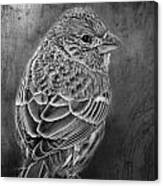 Finch Black And White Canvas Print