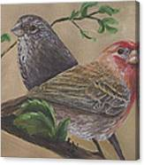 Finch Delights Canvas Print