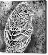 Finch Grungy Black And White Canvas Print