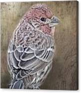Finch Low Saturation Canvas Print