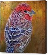 Finch With Gold Texture Canvas Print