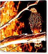 Fire Hawk 0112 Canvas Print