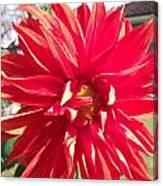 Fire Petals Canvas Print