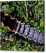 Firefly Larva Canvas Print