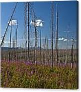 Fireweed  Epilobium Angustifolium Glacier National Park Usa -1 Canvas Print