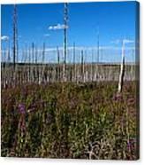 Fireweed  Epilobium Angustifolium Glacier National Park Usa -2 Canvas Print