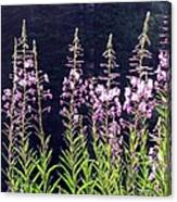Fireweed Flowers Canvas Print