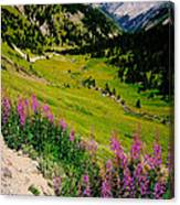 Fireweed In Henson Creek Drainage Canvas Print