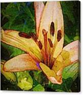 First Asiatic  Canvas Print