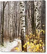 First Snow. Hidden Path Canvas Print