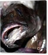 Fish Catch Canvas Print