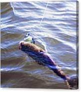 Fish In The Water Canvas Print
