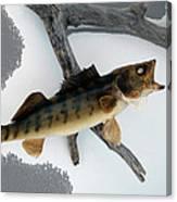 Fish Mount Set 02 Bb Canvas Print