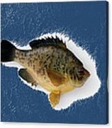 Fish Mount Set 08 C Canvas Print