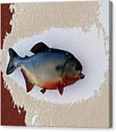 Fish Mount Set 12 C Canvas Print