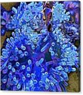 Fishie And The Sea Anemone Canvas Print