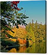 Flame Tree At Lake Spafford Canvas Print