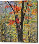 Flaming Fall Foliage Canvas Print