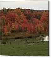 Flaming Foliage Autumn Pasture Canvas Print