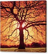 Flaming Oak Canvas Print