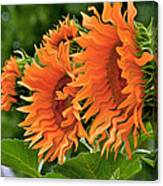 Flaming Sunflowers Canvas Print