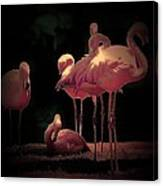 Flamingo 3 Canvas Print